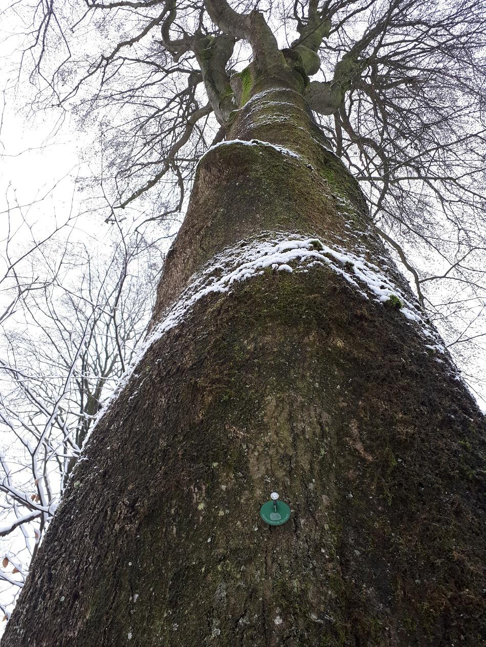 Gemeindeforst_Biotop_Baum_950x1266